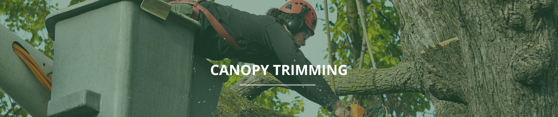 Home Tree Services Canopy Trimming & Canopy Trimming | Pruning u0026 Crown Reduction | Tree Trimming ...